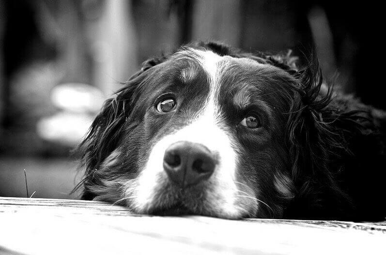 kutya4