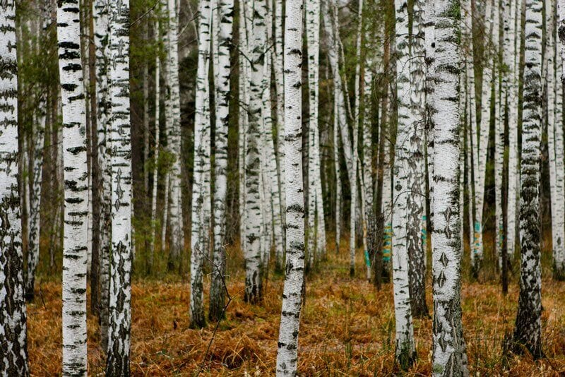 Brian Jeffery Beggerly, flickr.com