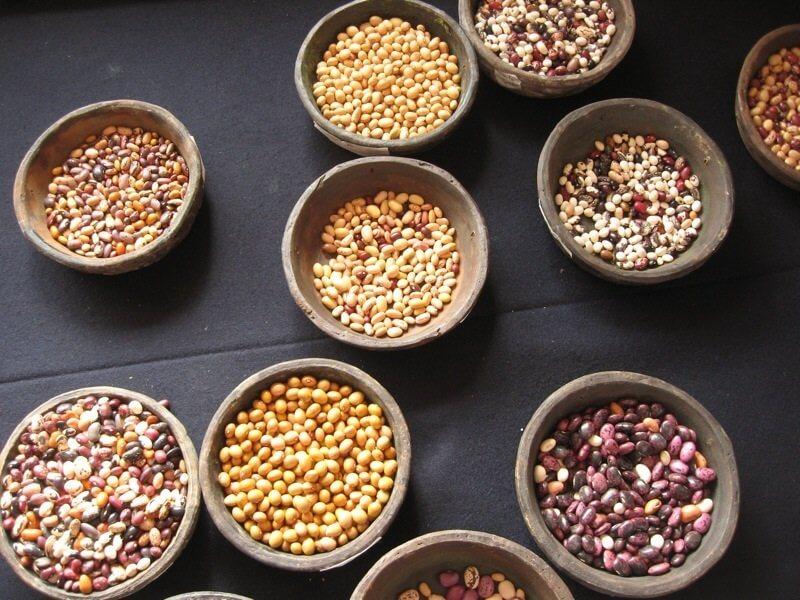 Common bean diversity.