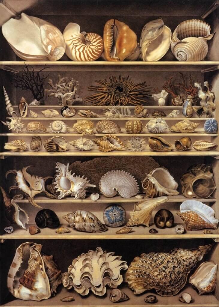 Alexandre Isidore Leroy De Barde: Kagylók gyűjteménye, commons.wikimedia.org