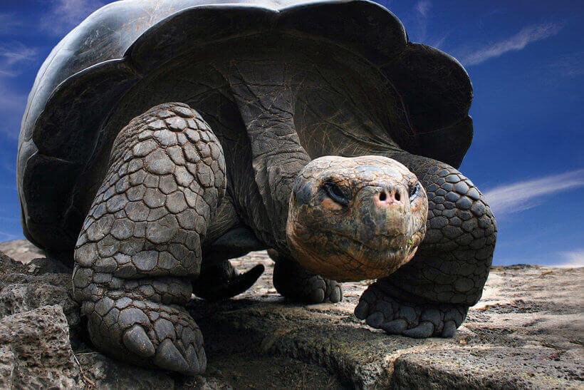 Miért van a teknősnek páncélja?