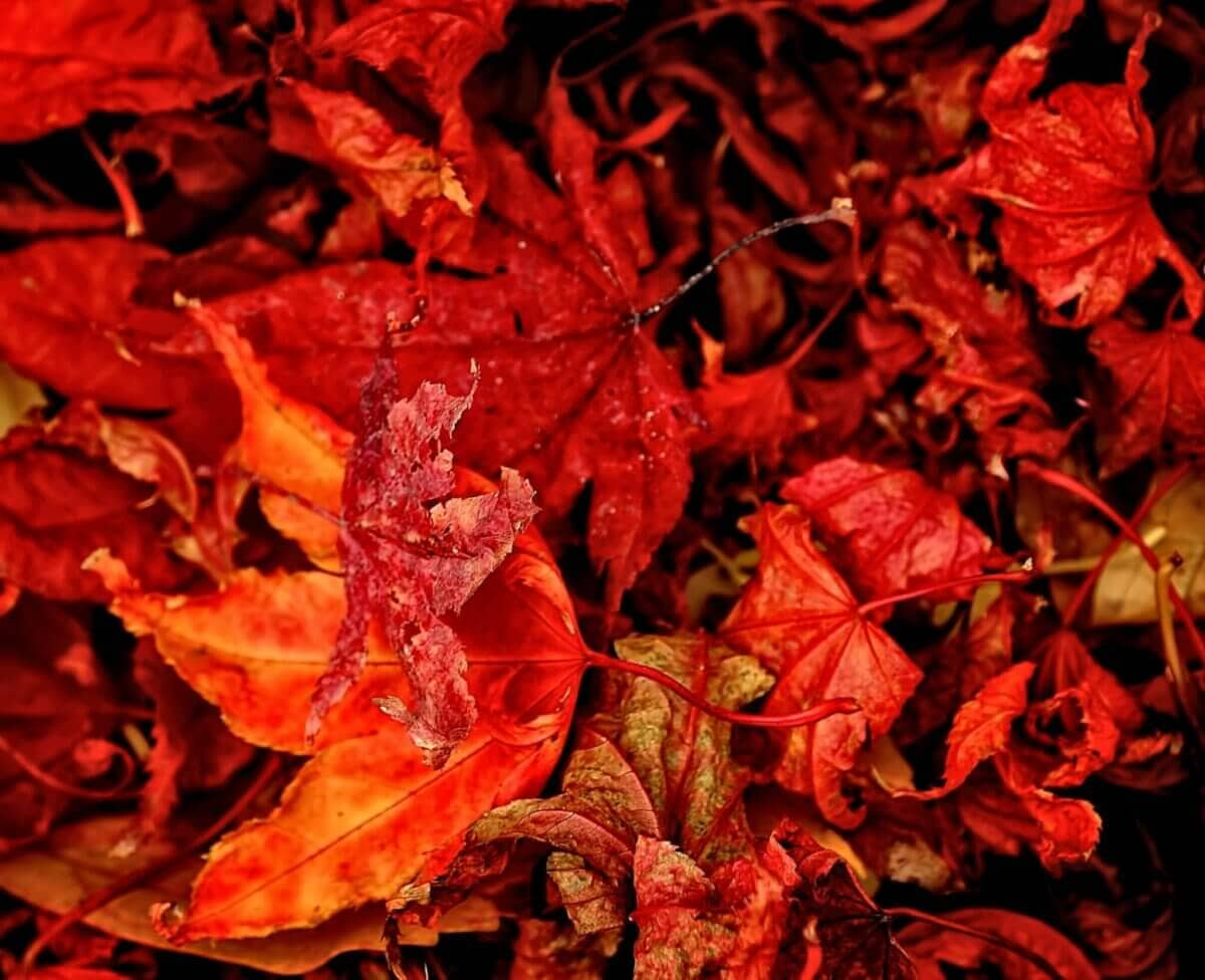 red and orange leaves close-up photography